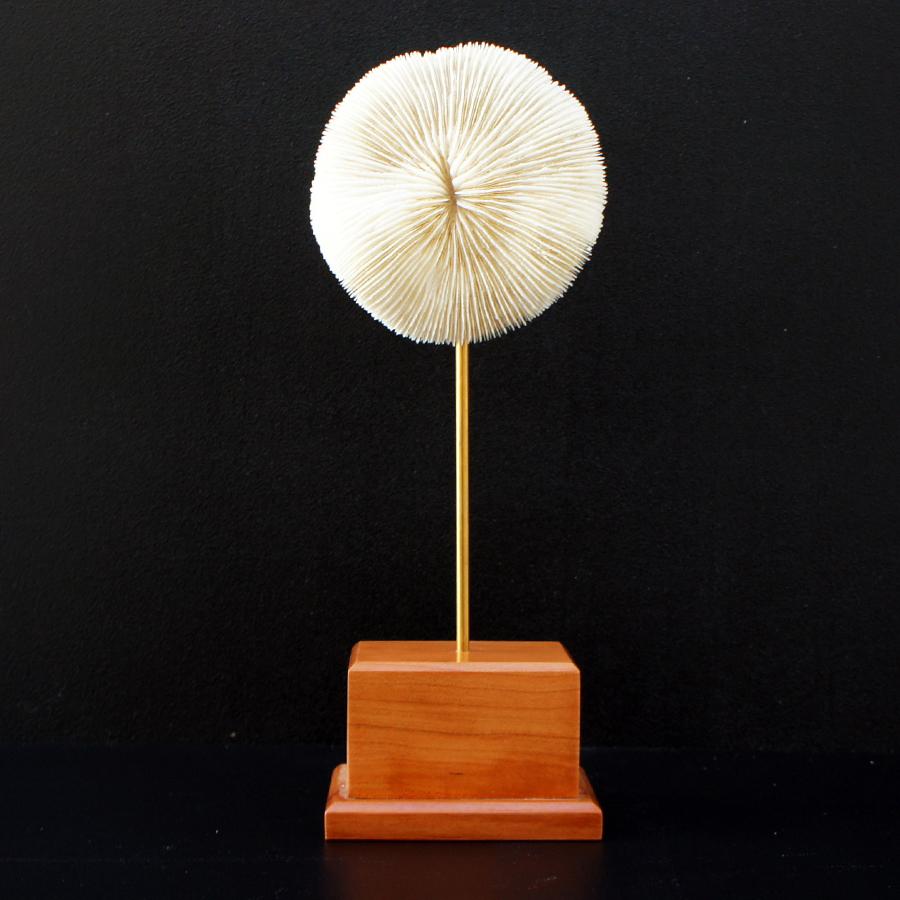 Coral blanco redondo sobre peana de madera nitelshop for Antecomedores redondos madera