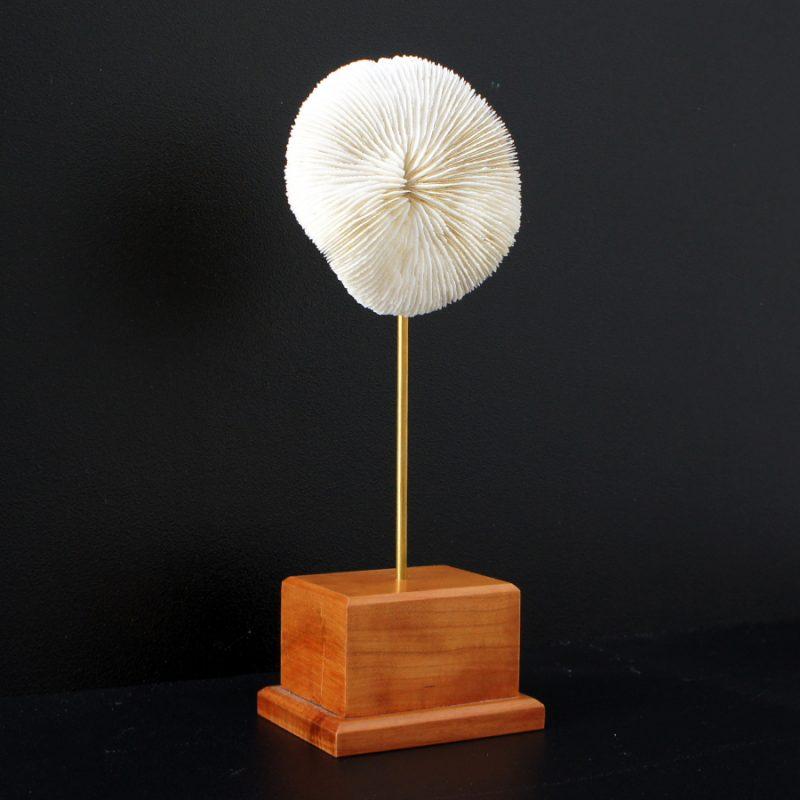 Coral blanco redondo sobre peana de madera