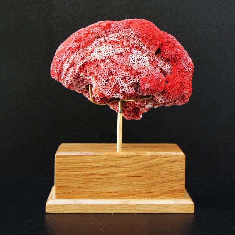 Coral rojo esponja sobre peana
