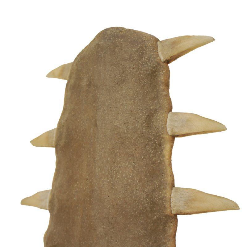 Dientes de pez sierra S.XIX sobre peana de roble